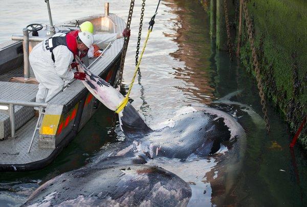 科学家警告:海洋生态破坏规模空前-科技前沿