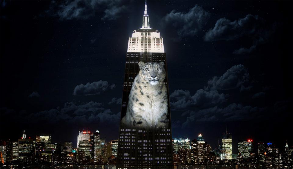 纽约帝国大厦投影濒危动物